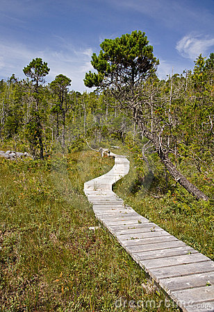 Forest Boardwalk Royalty Free Stock Photos - Image: 11701348