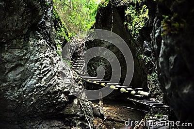 Forest boardwalk in Slovakia Paradise