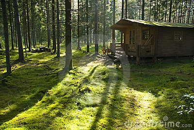 Forest cabin on sunny morning