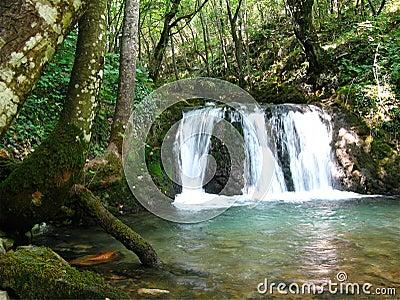 Forest cascade falls