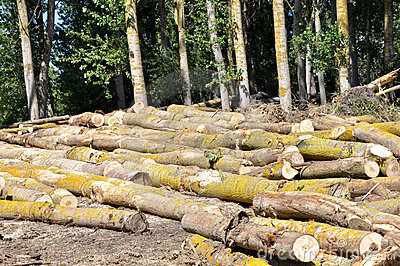 Forest cleared