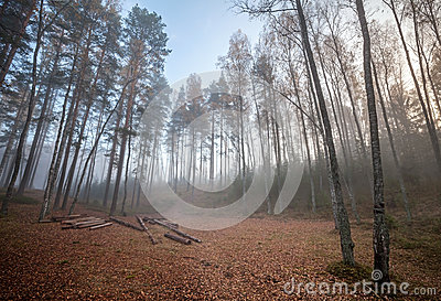 Forest clearing with logs in foggy morning