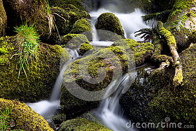 Forest creek streaming between moss