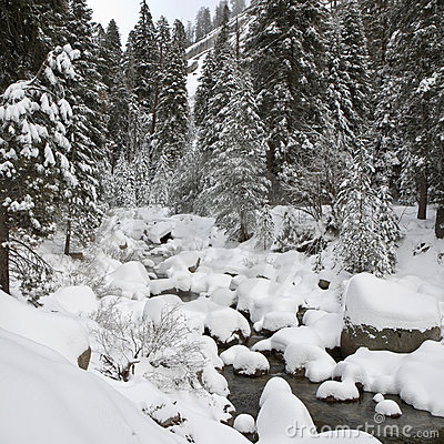 Forest Creek in Winter at Sequoia National Park