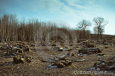 Forest Destruction Stock Photos - Image: 12893083