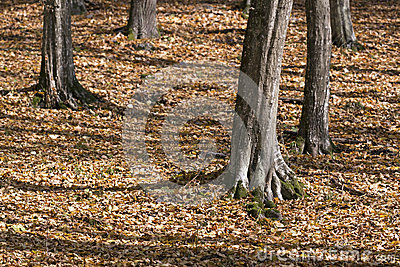 Forest detail in Autumn