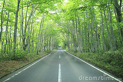 Forest drive