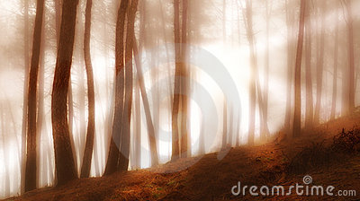 Forest in early morning fog