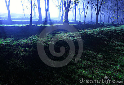 Forest at evening
