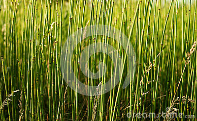 The forest of  field grass