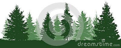 Forest fir trees silhouette. Coniferous green spruce. Vector on white background. Vector Illustration