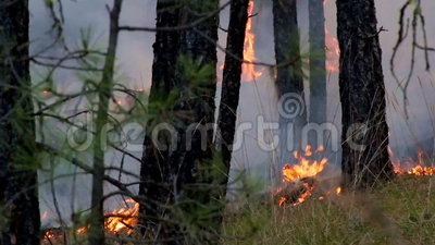 Forest Fire Cinemagraph Living Photo stock video footage