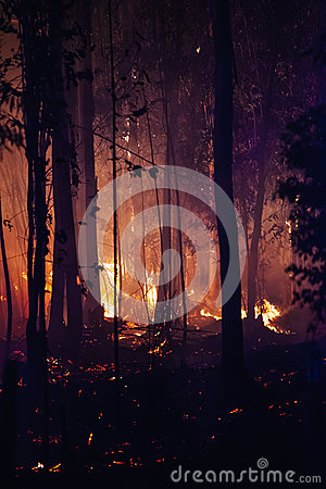 Free Forest Fire Damage Stock Image - 89459081