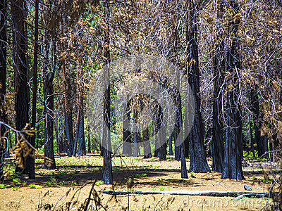By forest fire damaged trees