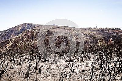 Forest fire devastation