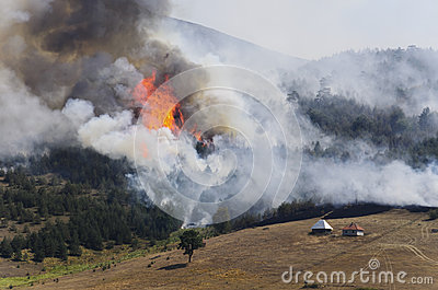 Forest fire on mountain