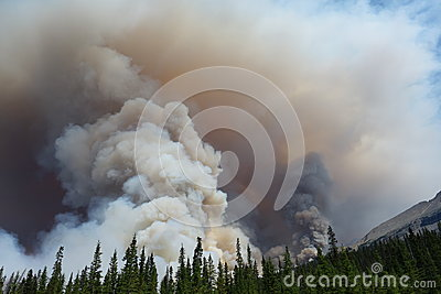 A forest fire in a national park