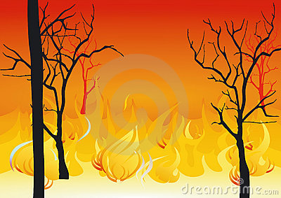 Forest Fires Royalty Free Stock Photos Image 23005468