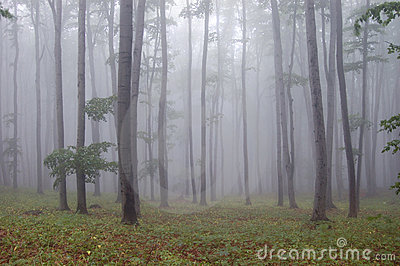 Forest with fog and green grass