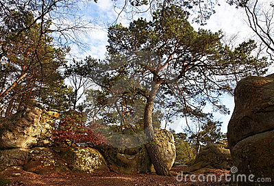 The forest of Fontainebleau
