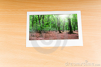 Forest on the   frames