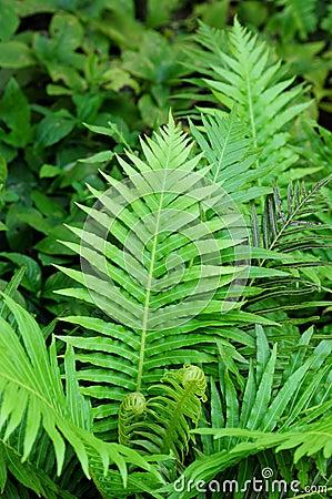 Forest Green Fern