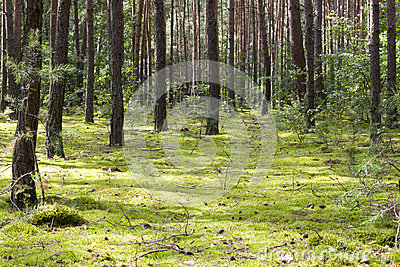 Forest with green moss