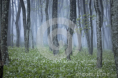 Forest with green plants and white flowers in spring