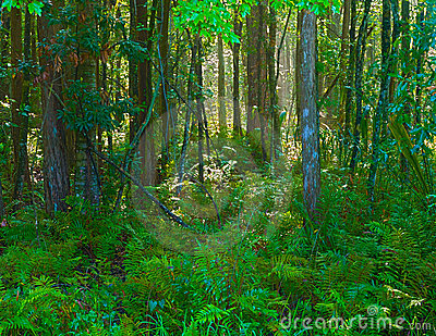 Forest horizontal HDR 1