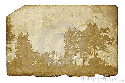Forest illustration on grunge background