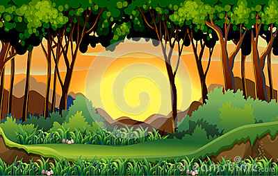 Forest Vector Illustration