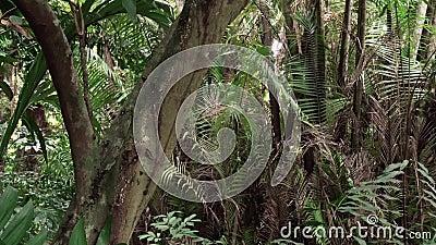 Forest Jungle Zoom video d archivio