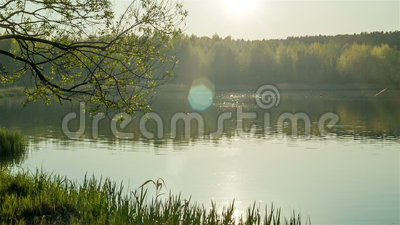 Forest lake at the evening. Calm forest lake at the evening stock video footage