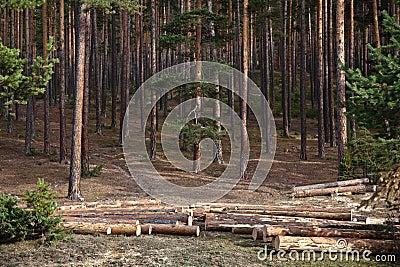 Forest Logging