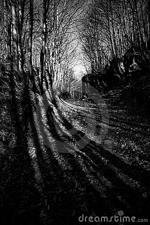Forest long shadows 2