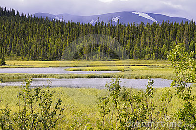 Forest marsh and mountain