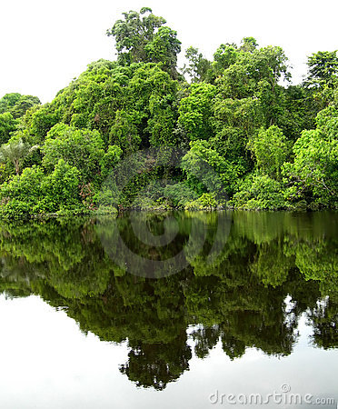 Free Forest Mirrored In A Lagoon On The Amazon Stock Photography - 12830032