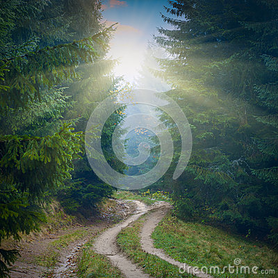 Free Forest Misty Road Royalty Free Stock Photography - 50235537