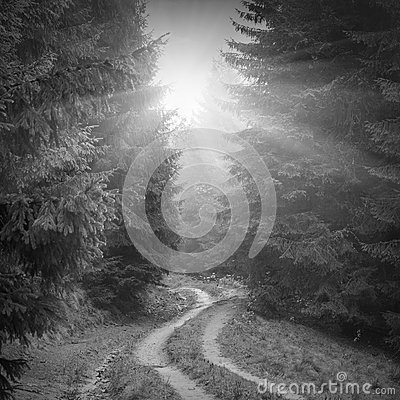 Free Forest Misty Road. Black And White Stock Photo - 52554020