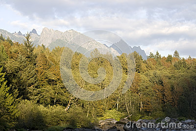 Forest and mountain landscape