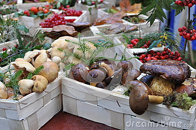 Forest mushrooms in baskets