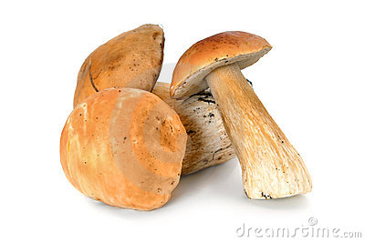 Forest mushrooms boletus
