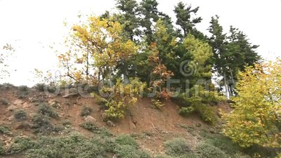 Forest near to lake Plastira Karditsa Greece stock video