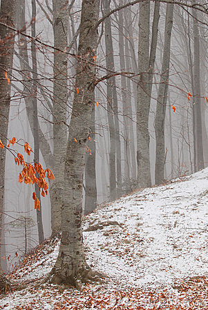 Free Forest Of Winter Royalty Free Stock Photography - 3950517