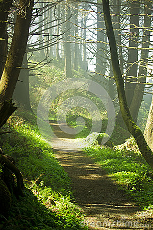 Free Forest Path Stock Photo - 24920260