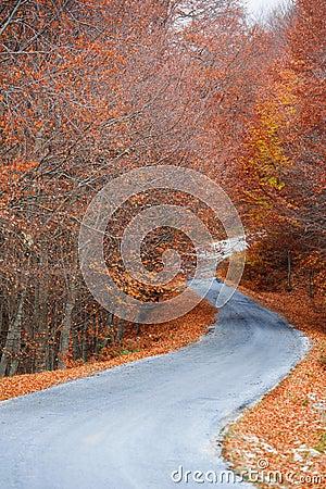 Forest path at autumn season