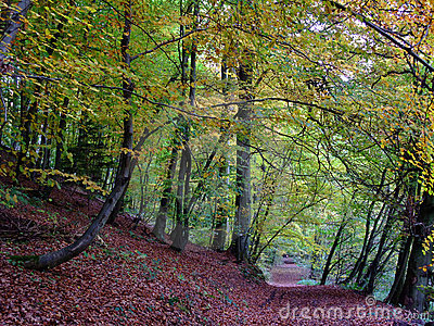 Forest and path in autumn time