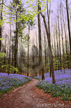 Free Forest Path In Springtime Royalty Free Stock Photography - 4002157