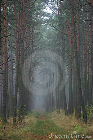 Forest Path, Lithuania