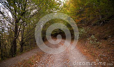 Forest Pathway During Daytime Free Public Domain Cc0 Image
